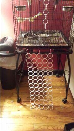 Pet Bird DIY Ideas... Easy diy birdie ladder made with shower curtain rings zip tied together!