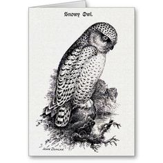 Snowy Owl Vintage Bird Illustration Cards