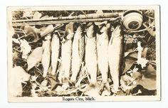 Rogers City, Michigan, Fish on Line, 1940 Photo Postcard