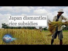 Rice Smackdown, Sriracha Shutdown, Pizza Throwdown - New World Next Week