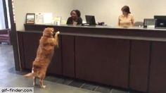 Excuse me, I would like a treat withdrawal | Gif Finder – Find and Share funny animated gifs