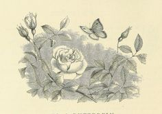 Image taken from page 28 of '[Original Poems, for Infant Minds ... A new and revised edition. [By Ann and Jane Taylor and others.]]' | by The British Library