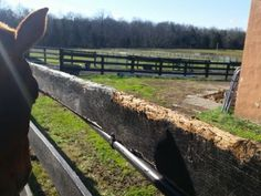 Dealing with horses that eat wood and manure!  http://www.proequinegrooms.com/index.php/tips/barn-management/coprophagia-need-i-say-more/