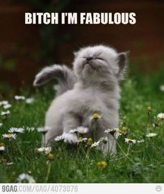 Bitch Im fabulous#Repin By:Pinterest++ for iPad#