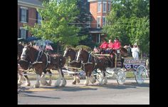 Delaware County Ohio - All Horse Parade- saw this in my son & daughters front yard.