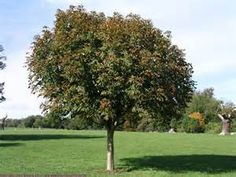 trees - Yahoo Image Search Results