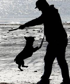 Quando capita che Fido è un po' troppo invadente » Fbsocialpet.com: il social forum per cani, gatti, cavalli, tutti gli animali