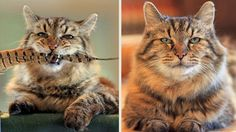 This Handsome Champ Is The World's Oldest Domestic Cat Cats are known to have nine lives, but this cat from Oregon, United States has surpassed this old saying almost literally. This miracle cat is known as Corduroy. The name of Corduroy has been added to the Guinness Book of World records as the oldest living …