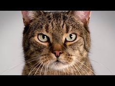 "▶ Mercedes-Benz TV: CLA TV commercial ""Cat"". Over 800,000 views. Proves cat content can be successful for many different brands."