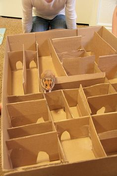 Perfect for a rainy day - Hamster maze
