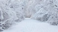 Collection of Wallpaper Snow on HDWallpapers Wallpaper Snow Wallpapers) Winter Wonderland Background, Winter Wonderland Pictures, Winter Wonderland Wallpaper, Snow Wallpaper Hd, Winter Snow Wallpaper, Nature Wallpaper, Winter Wallpapers, Plum Wallpaper, Scenery Wallpaper