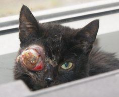 Verwaarloosde kitten binnengebracht Cats, Animals, Gatos, Animais, Animales, Animaux, Animal, Kitty, Serval Cats