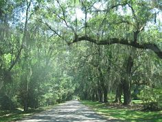 Ashley River Road  Charleston S.C. - the beautiful road to our gorgeous plantations out here.