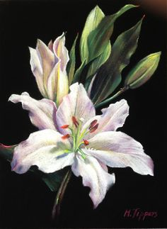 Elegance by Marie Tippets, Pastel, 12 x 9 Soft Pastel Art, Pastel Artwork, Pastel Flowers, Pastel Drawing, Art Floral, White Lilies, Day Lilies, Illustrations Pastel, Watercolor Flowers