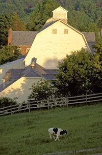 aahhh, just love my barns!