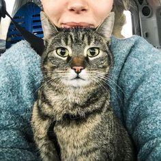 LIEKELAND sur Instagram: For the Dutch followers: lieve volgers, ik heb jullie hulp nodig! Ons katje Lino is sinds afgelopen donderdag verdwenen vanuit haar… Animals Beautiful, Instagram Posts, Cutest Animals