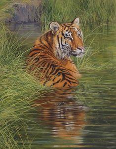 Tigerwater by David Stribbling