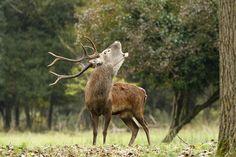 The deer's bellow by pierangelospedini. Please Like http://fb.me/go4photos and Follow @go4fotos Thank You. :-)
