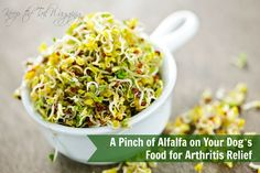 A Pinch of Alfalfa for Arthritis Relief in Dogs