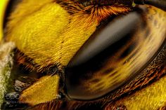 European Wool Carder Bee X by dalantech MediaFire to get up to 50GB of free online space. https://mfi.re/?qw4u8hc