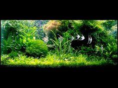 Aqua Design Amano - Aquariums Australia