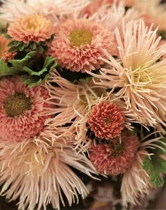China Asters: 'Matsumoto Apricot,' and 'Florette Champagne'
