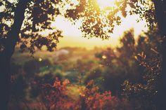 lights, kiss, car girls, tree, dreams, autumn, girl style, mornings, golden hour