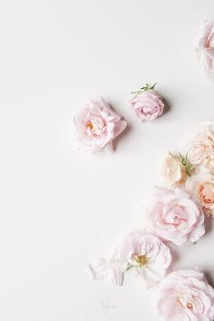 Wall paper iphone vintage backgrounds wallpapers pink roses 37 ideas for 2019 Cute Wallpaper Backgrounds, Trendy Wallpaper, Flower Backgrounds, Pink Wallpaper, Flower Wallpaper, Cute Wallpapers, Vintage Backgrounds, Wallpaper Quotes, Cellphone Wallpaper
