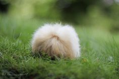 Lost wig or cuddly fur ball?
