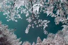 Pretty in pink: what spring looks like in infrared – in pictures