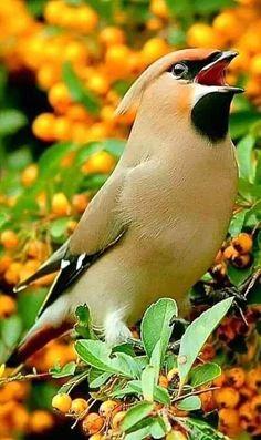 Facebook Kinds Of Birds, All Birds, Birds Of Prey, Little Birds, Love Birds, Birds Pics, Pretty Birds, Beautiful Birds, Animals Beautiful