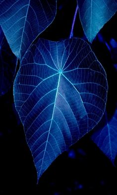 leaves at night. Blue