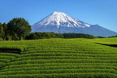 Fuji, Shizuoka Prefecture, Japanで撮影された大淵笹場の写真 富士と茶畑 大淵笹場 2 : パシャデリック