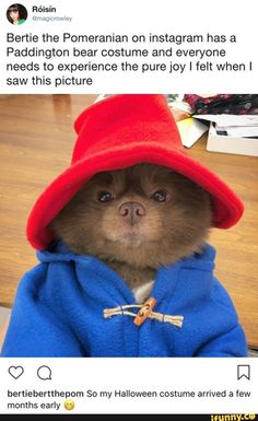 Funny Dogs Pomeranian dog dressed as Paddington Bear Cute Funny Animals, Funny Animal Pictures, Cute Baby Animals, Funny Cute, Funny Dogs, Animals And Pets, Funny Humor, Cute Puppies, Cute Dogs