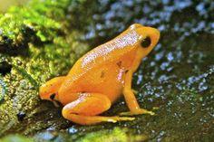 Breeding Boost For Critically Endangered Frog Edinburgh 247 City Guide