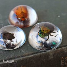 Beetles in Resin Jewelry and Paper weights! Awesome Halloween craft! Clear polyester resin and dead bugs!