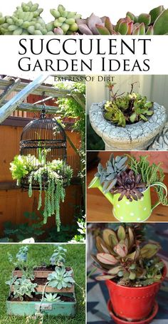 Want some plants that are drought-tolerant and gorgeous? Succulents are a great choice for quirky garden containers and planting in unusual places. Turn old junk into wonderful garden art with these beloved plants.