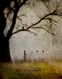 The Story is Over Now - digitally altered photography by Jamie Heiden