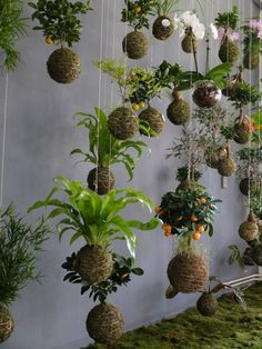 Kokedama: What It Is, Amazing Arrangement - Mini Jardins Japonais String Garden, Cool Plants, Air Plants, Indoor Plants, Cactus Plants, Ikebana, Garden Art, Garden Design, Easy Garden