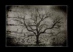 res-excido-natura No4