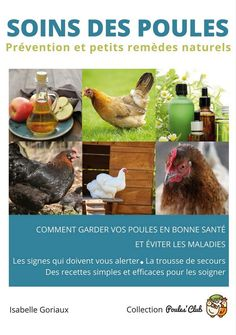 Buy Soins des poules: Prévention et petits remèdes naturels by Isabelle Goriaux and Read this Book on Kobo's Free Apps. Discover Kobo's Vast Collection of Ebooks and Audiobooks Today - Over 4 Million Titles! Ebooks Pdf, Keeping Chickens, Chicken Breeds, Permaculture, Animals And Pets, Voici, Guide, Gardening, Chicken Ideas