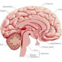 The brain may be adversely affected by video gaming altering social and academic behaviour.