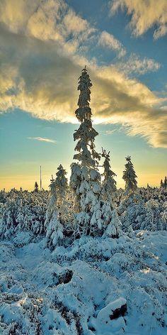 WINTER WONDERLAND -- Jeseniky -- Czech republic -- photo via: Milan Raska -- 500px.com Snow Scenes, Winter Scenes, Blooming Trees, Picture Places, Snowy Day, Winter Beauty, Landscape Pictures, Winter Solstice, Winter