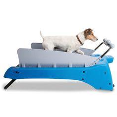 haha seriously.. a dog tredmill