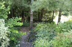 Shade Garden Paths - Bing Images
