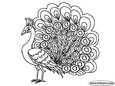 The Form Of Peacock