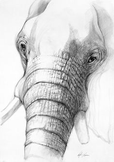 100% of the profits from the sale of this artworks go to conservation initiatives around the world. www.animalworks.com.au  Contact animalworksaustralia@gmail.com to purchase. #elephant #art #drawing #elephantdrawing #elephantart #wildlife #conservation