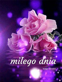 Good Night, Good Morning, Motto, Humor, Frases, Nighty Night, Buen Dia, Bonjour, Have A Good Night