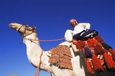 Bedouin riding camel, Sinai, Egypt, North Africa, Africa