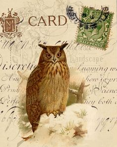 Claire Pryce - Owl in Snowy Setting copy.jpg